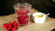 Bunch of viburnum falls into a glass of viburnum tea video