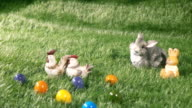 Bunnies, chicks and colored eggs laying on the green grass video