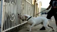 burking dog video
