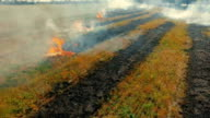 Burning dry grass in the field video