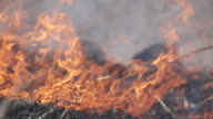 Burning dry grass - reason of forest fires. video