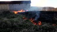 Burning dry grass video