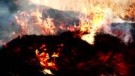 Burning fire video