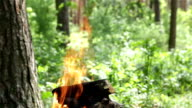 Burning firewood for cooking food over charcoal. video