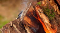 Burning firewood in brazier close-up video