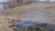 Burning last year's dry grass in the spring on the river bank video
