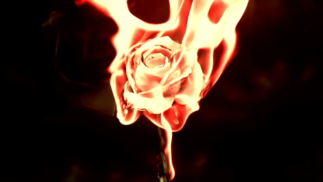 burning rose video