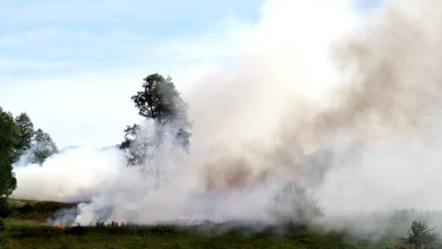 Burning Tree video