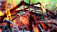 Burning wood video