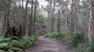 Bush Track Surrounded by Trees and Bracken Fern video