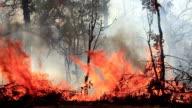 Bushfire video