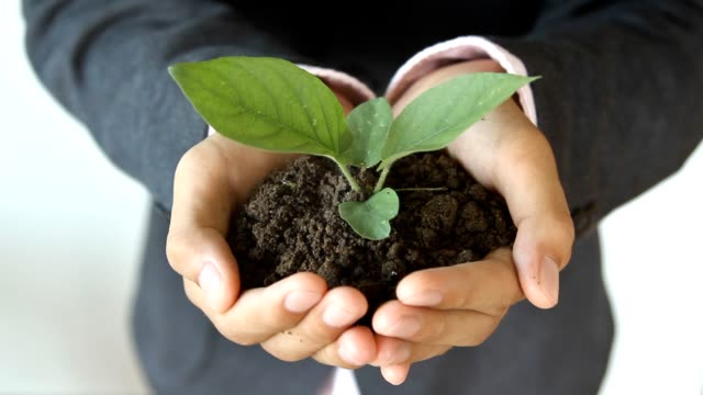 Businessman holding young plant video