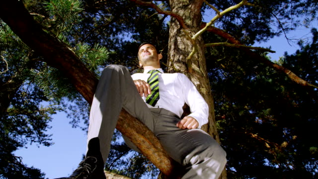 Businessman sitting in a tree video