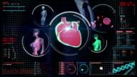 Businessman touching digital screen, scanning blood vessel, lymphatic, circulatory system video