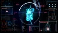 Businessman touching digital screen, scanning internal organs, Digestion system. video