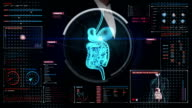 Businesswoman touching digital screen, scanning internal organs, Digestion system. video