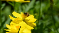 Busy bee video