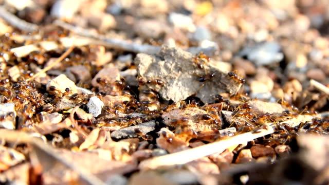 Busy Black Ants walking on floor video