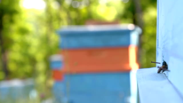 Busy Summer Bees Returning to Apiary Nature Background HD video
