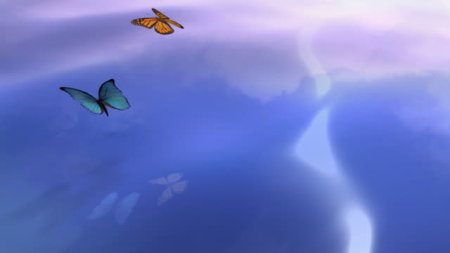Butterflies flying over the water video