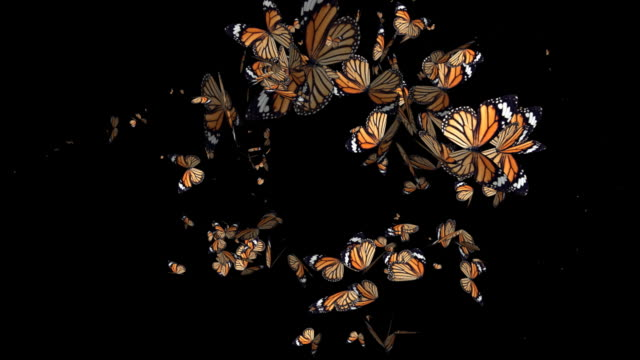 Butterflies - HD+Alpha, Loop video