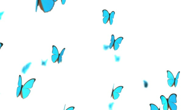 Butterflies, HD+Loop video
