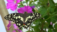 butterflies to the garden of pink flowers video