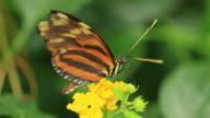Butterflies video