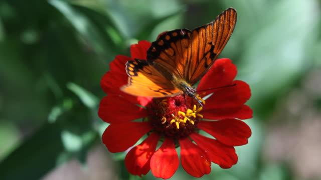 butterfly 07 video