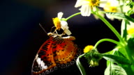 butterfly and flower video