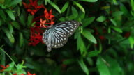 Butterfly and flowers in garden video