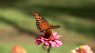 Butterfly and spider on flower video