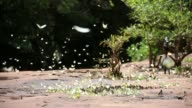 Butterfly at Pang Sida National Park video