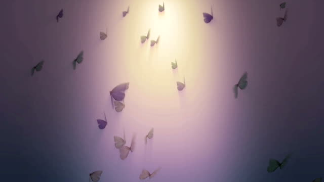 Butterfly background loop video