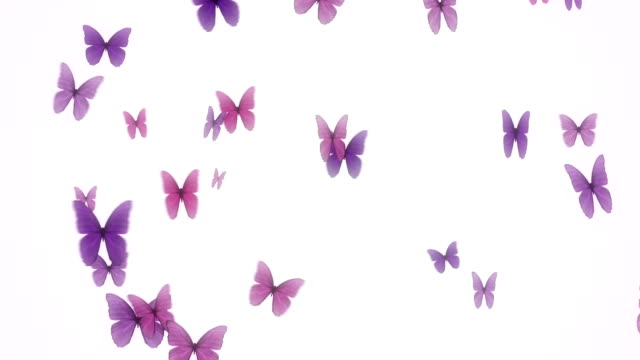 Butterfly background video