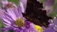 SLOW MOTION: Butterfly Close Up video