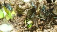 Butterfly dolly shot ,HD video