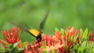 Butterfly feeding on flowers video