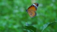 Butterfly Fly Up Slow II video
