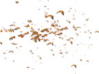Butterfly flying animation many butterflies video