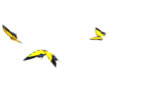 butterfly flying animation Yellow  butterflies video