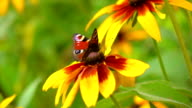 Butterfly flying away from yellow flower, super slow motion clip video