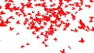 Butterfly Heart video