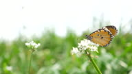 Butterfly in flower field video