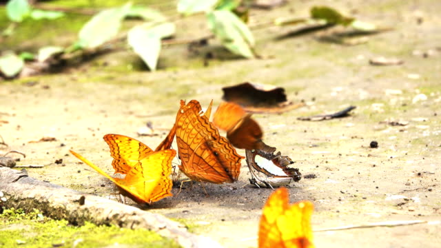 Butterfly in Forest video