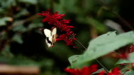 Butterfly in love with flower slow motion capture video