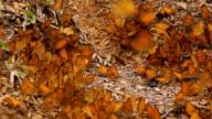 Butterfly in slow motion video