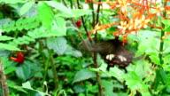 Butterfly in the garden video