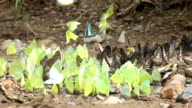 Butterfly in the wild,Slow motion video