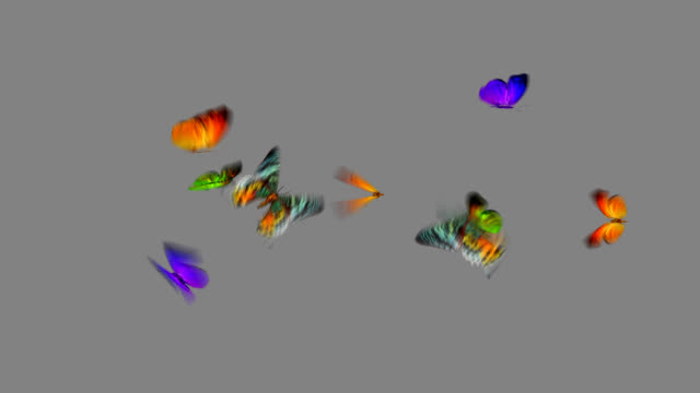 3D Butterfly Loop video